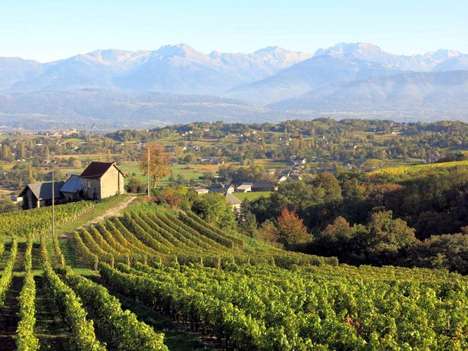 A DAY IN THE SAVOYARD VINEYARDS